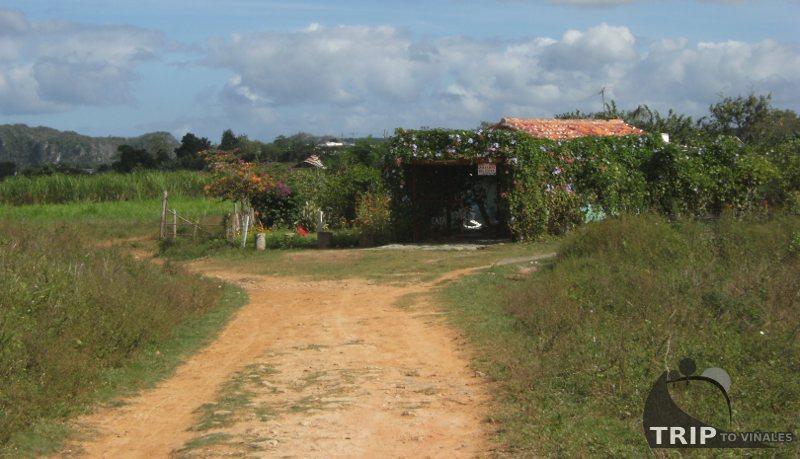 Casa Campo Mileydis. Casa Particular en Viñales. Pinar del Rio ...